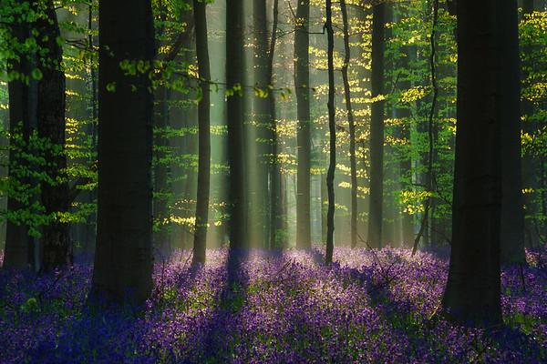The perfect spring scene