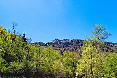Spring Comes To Grandfather Mtn