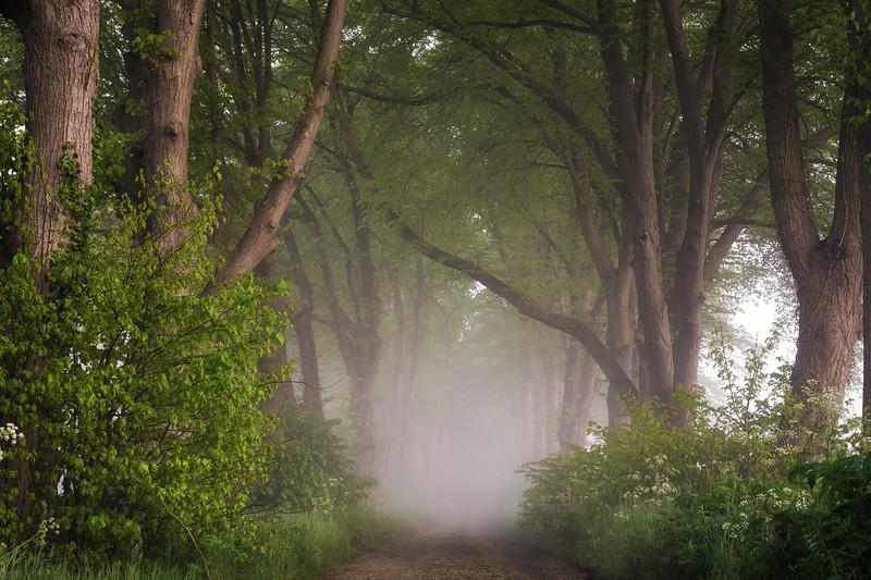 Fog on a morning in spring