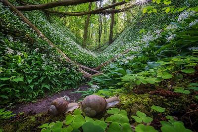 Snail paradise