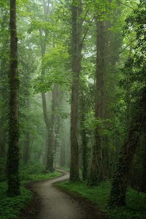 Jungle road II