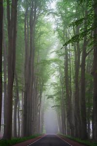 Foggy Dutch road