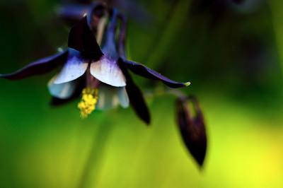 Spring Flower 2013