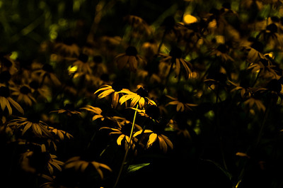 Spring's Light