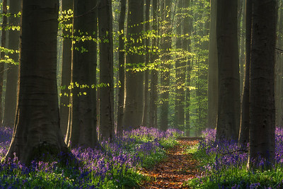Path of Fairy Tales