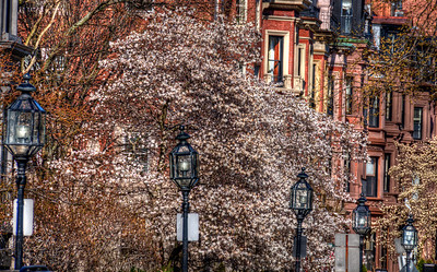 Comm Ave in Bloom