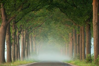 Foggy spring road