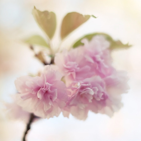 """""""I want to do with you what spring does with the cherry trees.""""  ~Pablo Neruda"""