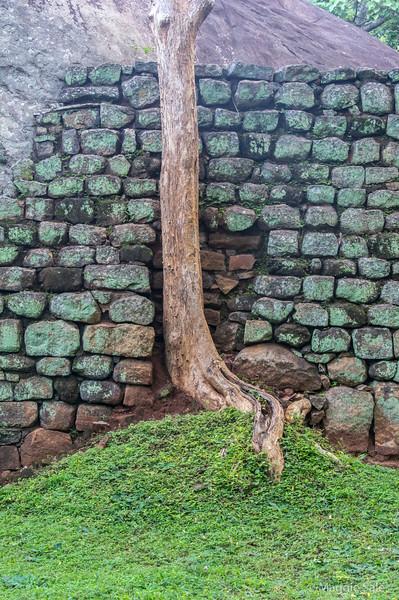 Tree and wall at the base of the climb.