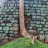 Tree and wall at the base of the climb.