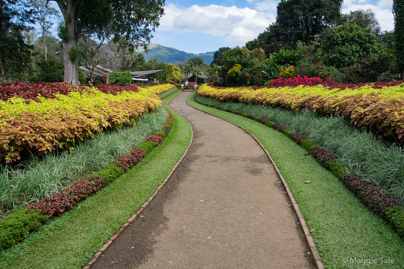 The coleus walk in the flower garden area.