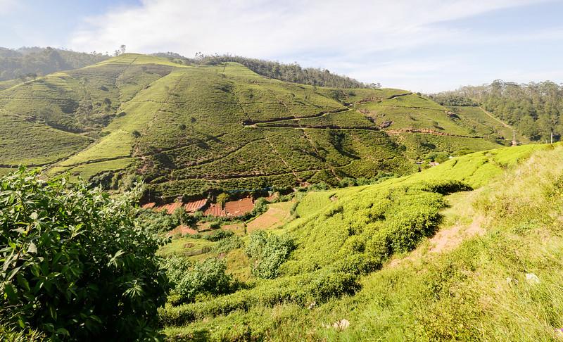 La cueillette de thé sur la route Nurawa Eliya et Kandy
