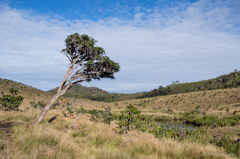 Horton Plains NP is at an elevation of over 2000 m. It is a mixture of montane grassland and cloud forest.