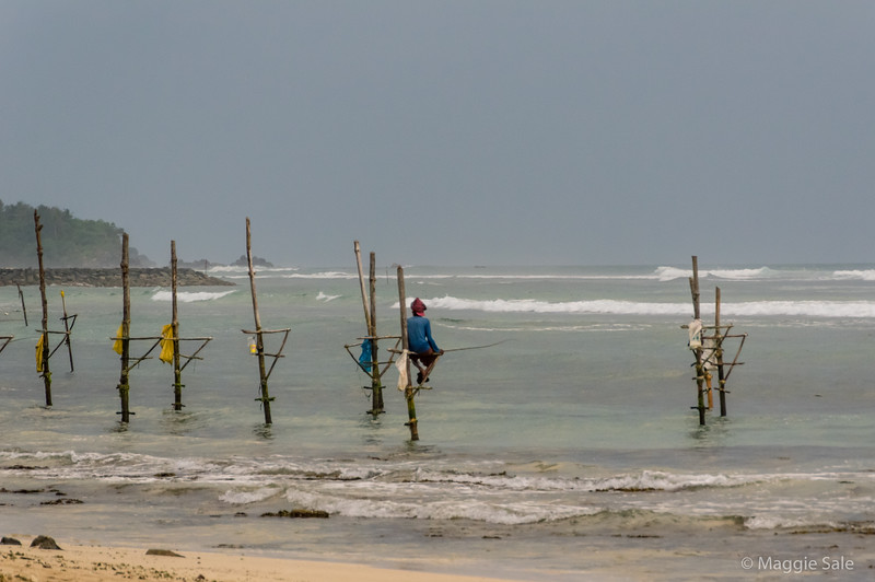 We wanted to photograph the famous stilt fishermen along this coast but knew they mostly only did it for tourists now. When we stopped nearby in the car we were astonished at the price they wanted - beyond ridiculous so we declined (and the weather wasn't conducive to pay big bucks without the good light). However as we walked along our beach in the late afternoon we could see this guy from the beach and with a long lens managed to catch this (not very good) picture!!