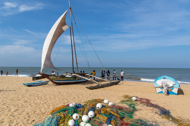 On the beach at Negombo, our first stop after arrival in Colombo. Negombo is an important local fishing port and these are the local boats. Our resort beach, north of the port had some of these boats for taking tourists out.