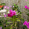 The Orchid House has over 300 varieties of orchid in it.