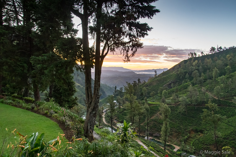 Dawn view from our hotel on a tea plantation not far from Nuwara Elyia.