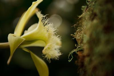 Orchid Show, Missouri Botanical Garden