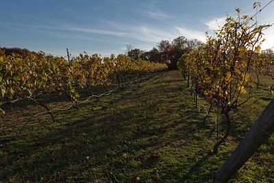 Charleville Vineyeard & Microbrewery, Ste. Genevieve, Missouri