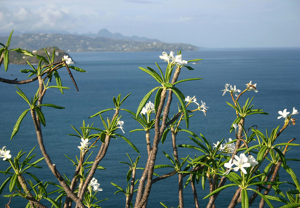 Beyond the florescence atop Fort Rodney - down to the western mouth of Rodney Bay and Choc Bay, separated by Masson Point