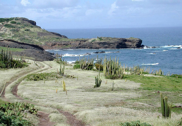 Pointe du Cap (Tip of Cape) - the very northern most end of the island - where the arid region supports cacti succulents - Gros Islet quarters