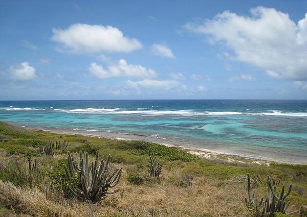 Across the Organ Pipe Cactus (Stenocereus peruvianus) - to the coral reef at Boiler Bay