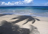 Coconut Palm shadow cast upon Davis Beach - with the Caribbean Sea beyond