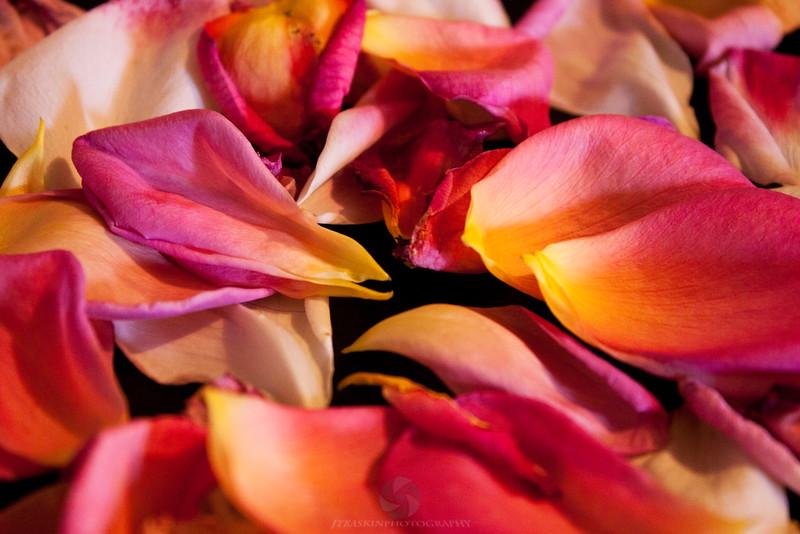Petals - IMG#1186
