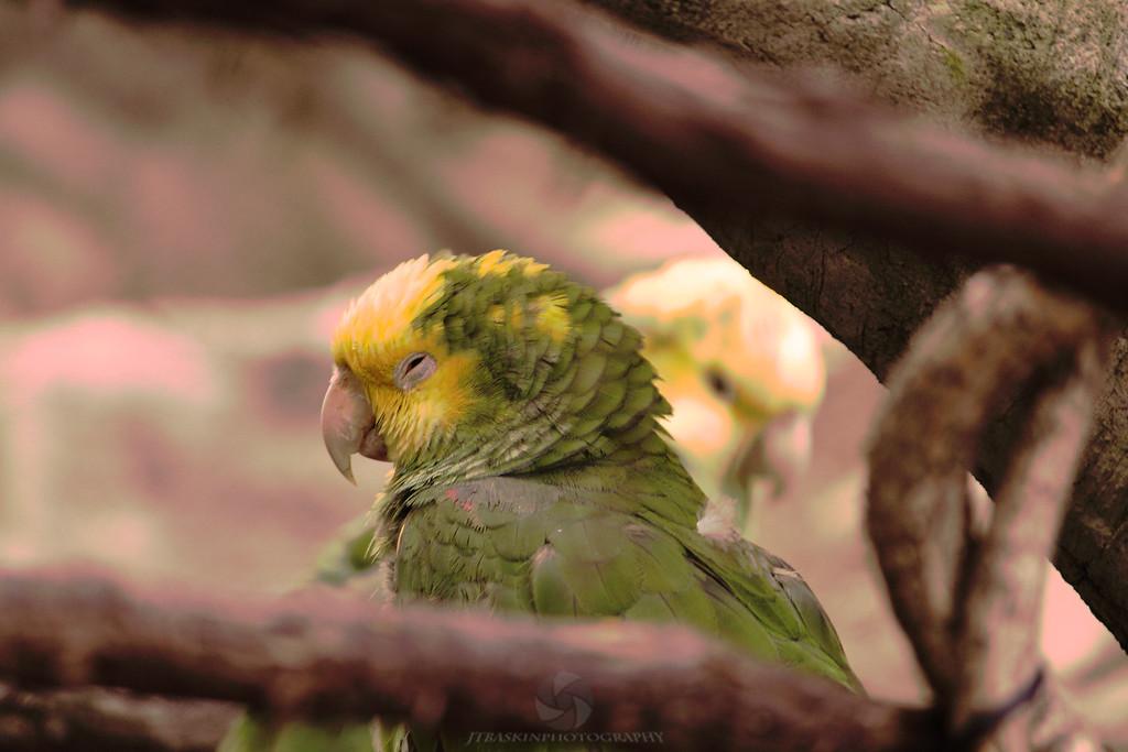 Love Birds - IMG#0090