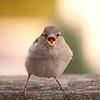 Angry Birdie - IMG#3659