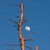 Rising Moon - IMG#1546