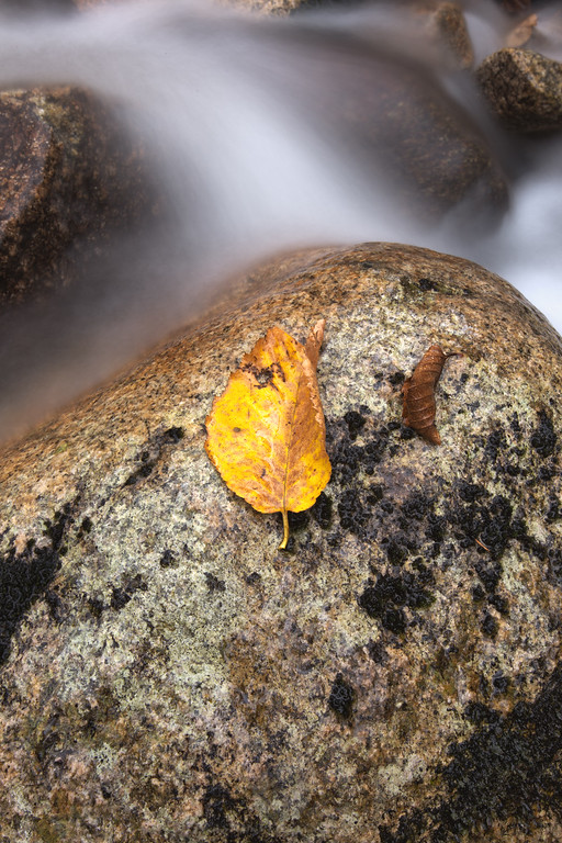 Simply Autumn - IMG_2218