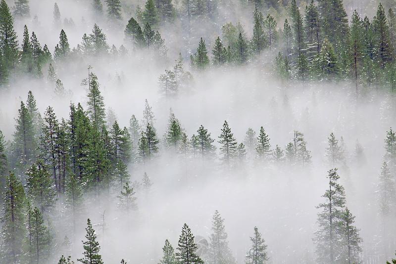Foggy Days in Yosemite Valley - IMG#0361