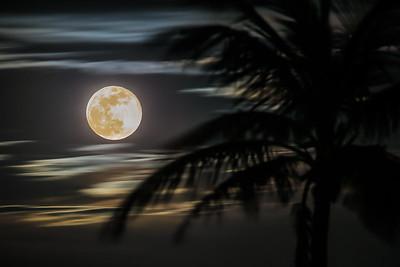 flower moon rising
