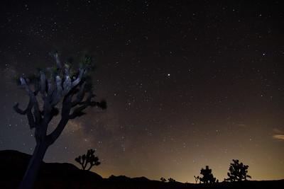 Joshua Trees & Stars