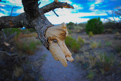 Los Alamos Trees