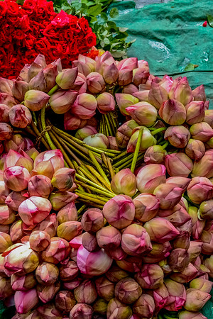 Bunches of Lotus