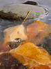 Autumn leaves on ice 4