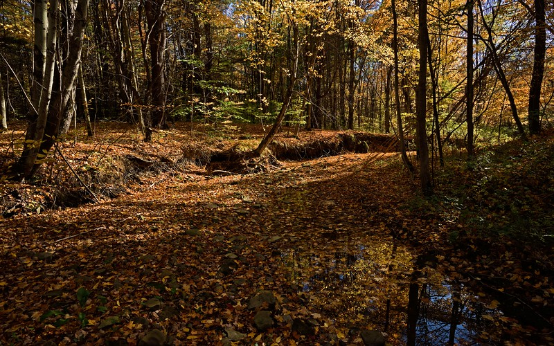 The streambed.  Nikon D750 and 20mm f/1.8G lens (October 2016).