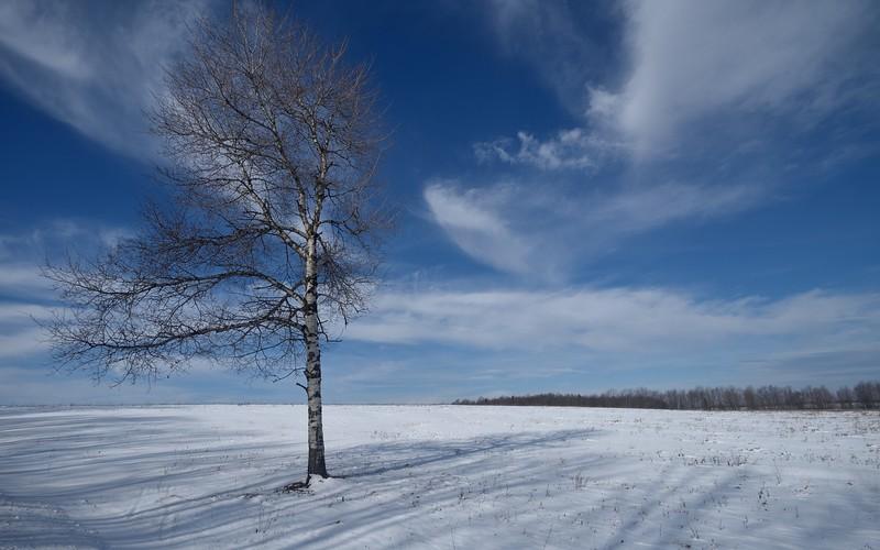 Hibernation time.  Nikon D750 and 18mm f/2.8D lens (January 2016).