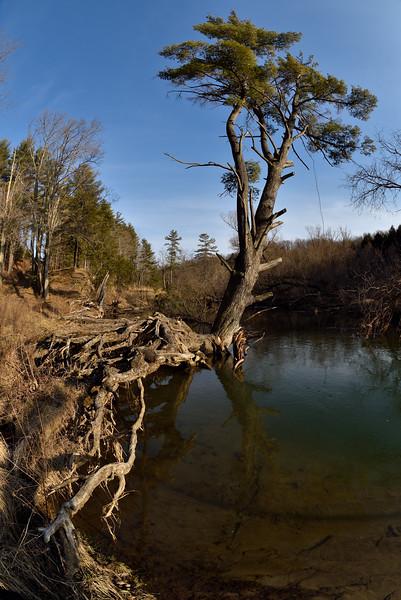 A precarious existence, along Wiscoy Creek.  Nikon D750 and 16mm f/2.8D fisheye lens (February 2016).