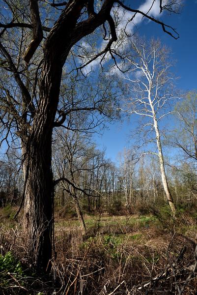 Along the creek.  Nikon D750 and 20mm f/1.8G lens (May 2016).