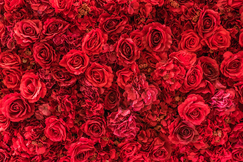 Backdrop of vivid red paper roses background in a wedding reception