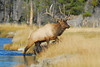 0512: Bull Elk Crossing River