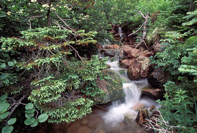 Woodland waterfall and creek, Newfoundland, Canada