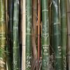 Love Bambo