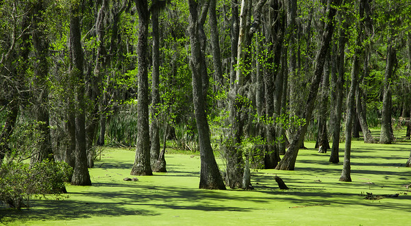 Duckweed Forest