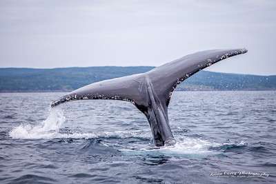 Whales-20140803-0002