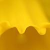 Daffodi closeup