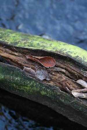 River log